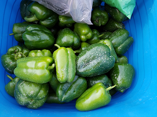 A bunch of green peppers