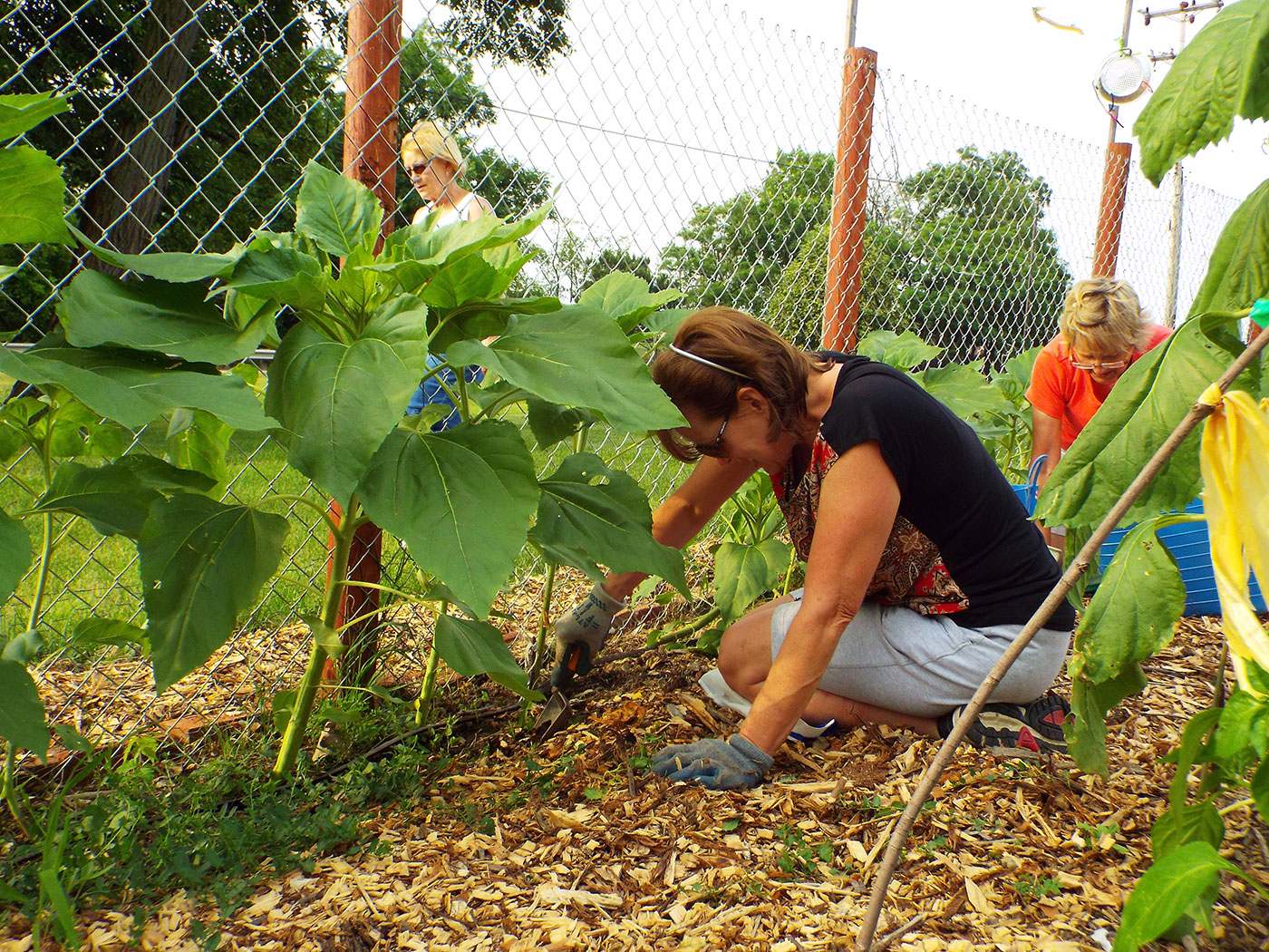 Women working in the community garden